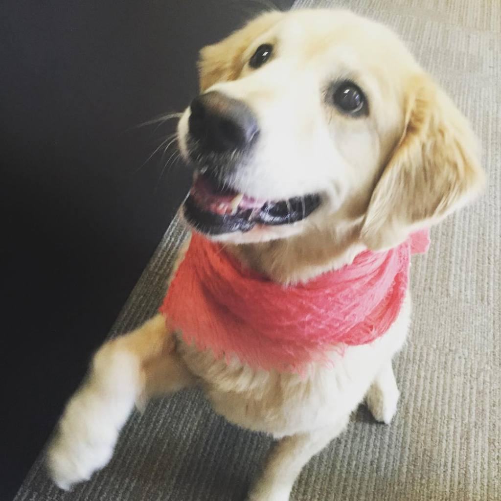 Dogs in the office boost productivity Seriously Its been provenhellip