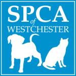 SPCA-logo-pro-blue.HIGHRES